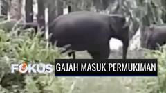 14 Gajah Masuk Area Permukiman di Riau, Warga Resah