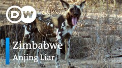 DW Going Wild 17 - Zimbabwe_Anjing Liar