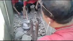 Evakuasi Monyet Di Jalan Hasan Assegaf Kabupatan Situbondo