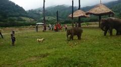 Lucunya, Anak Gajah Yang Frustasi Saat Mengejar Anjing