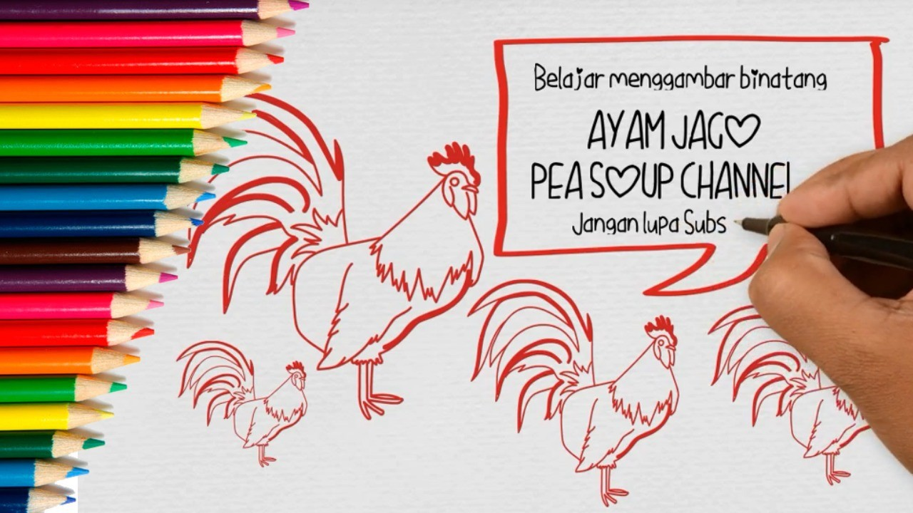 Belajar Menggambar Ayam Jago Untuk Anak TK
