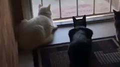 Lihatlah apa yang akan terjadi kepada 3 kucing tersebut, kalian tidak akan mempercayainya