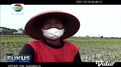 Ratusan Hektar Tanaman Padi di Ngawi Mati Kekeringan