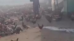 Ayam Kampus nginap di apartement