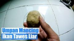 Resep Umpan Mancing Ikan Tawes Liar