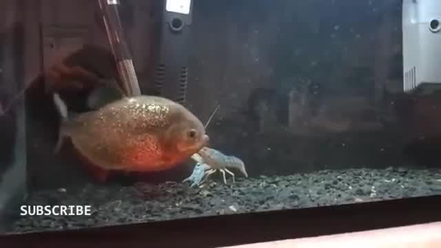 90 Gambar Ikan Hiu Vs Buaya HD Terbaru