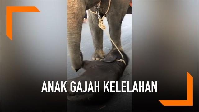 Unduh 4200 Koleksi Gambar Gajah Berubah Jadi Pocong  HD