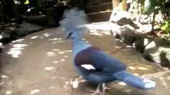 burung Papua