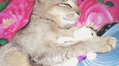 Funny Cats - Kucing Lucu