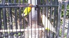 Bagusnya Love Bird Ini