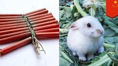 Suara petasan membuat 10.000 kelinci mati ketakutan - TomoNews