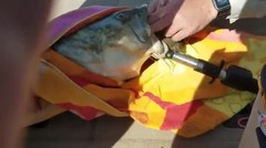 Ikan Keli Tercekik Kura - Kura Diselamatkan !