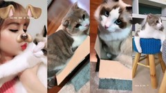 BLACKPINK's Lisa's Cats Leo and Luca