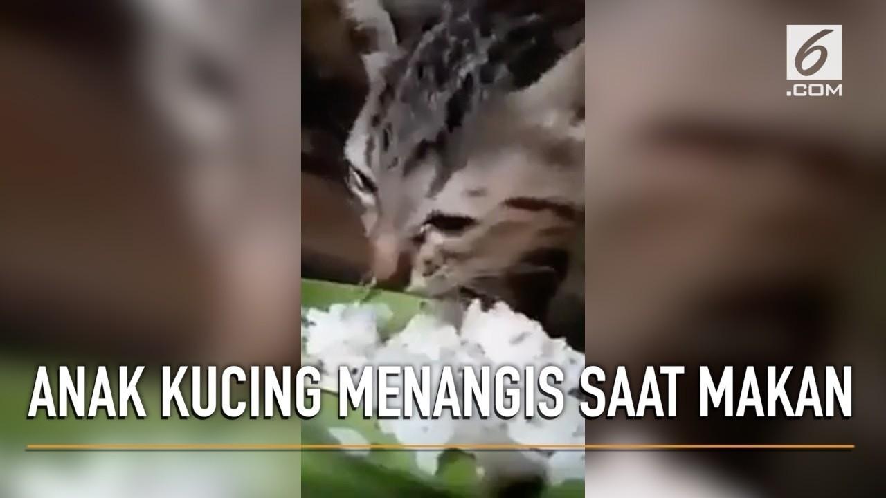 Download 97+  Gambar Kucing Sedih Nangis Imut HD