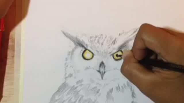 Cara Menggambar Burung Hantu Dengan Pensil Vidio Com