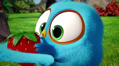 Angry Birds Blues - The Last Strawberry