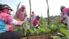 Trailer Panen Sayur di Tengah Kota | Berani Berubah Eps 33