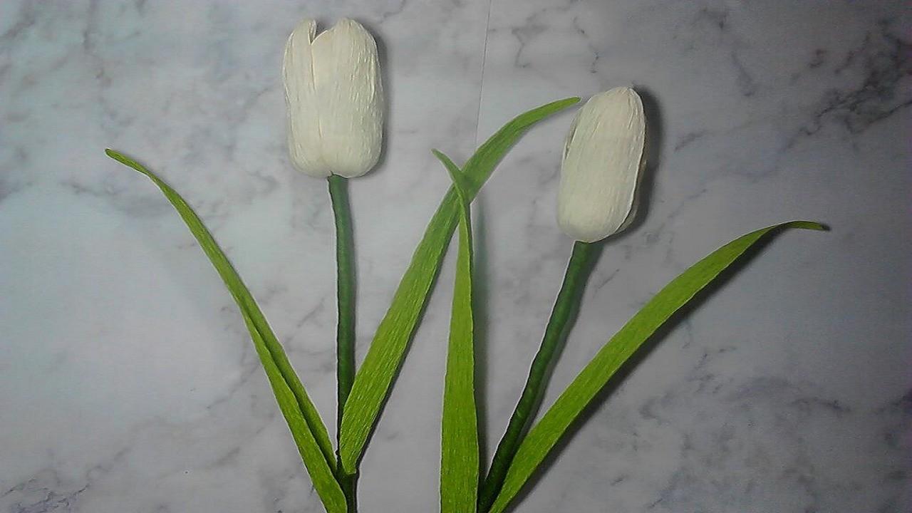 Unduh 7700 Koleksi Gambar Bunga Tulip Yg Mudah HD Terbaik