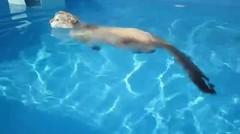Kucing Berenang Dengan Sang Majikan