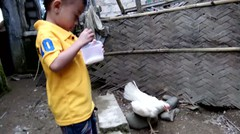 lucu Abidzar kasih makan anak ayam