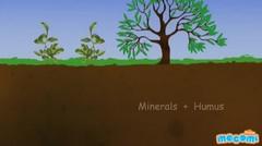 Soil Profile of Earth
