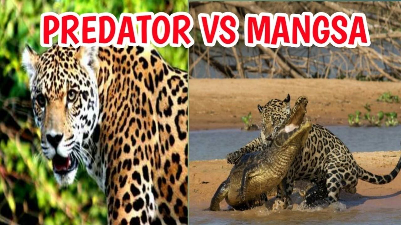 55 Gambar Animasi Hewan Predator Terbaik