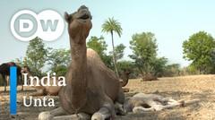 DW Going Wild 16 - India_Unta