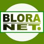 bloranet
