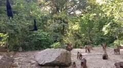 Penampakan Taman Penangkaran Monyet Sibaganding, Parapat