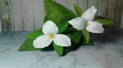 Cara Membuat Bunga Trillium