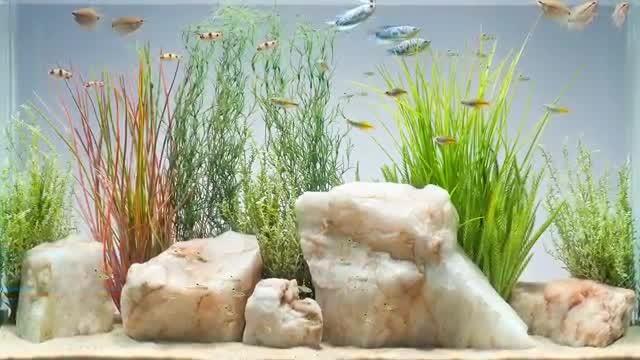 Unduh 430+ Background Aquarium Air Tawar Gratis Terbaik