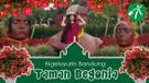 Keluyuran ke Taman Bunga & Kebun Sayur  di Begonia Lembang