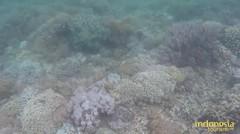 Menyelam Bersama Ikan Pari Manta di Labuan Bajo