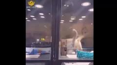 Persahabatan Kucing dan Anjing