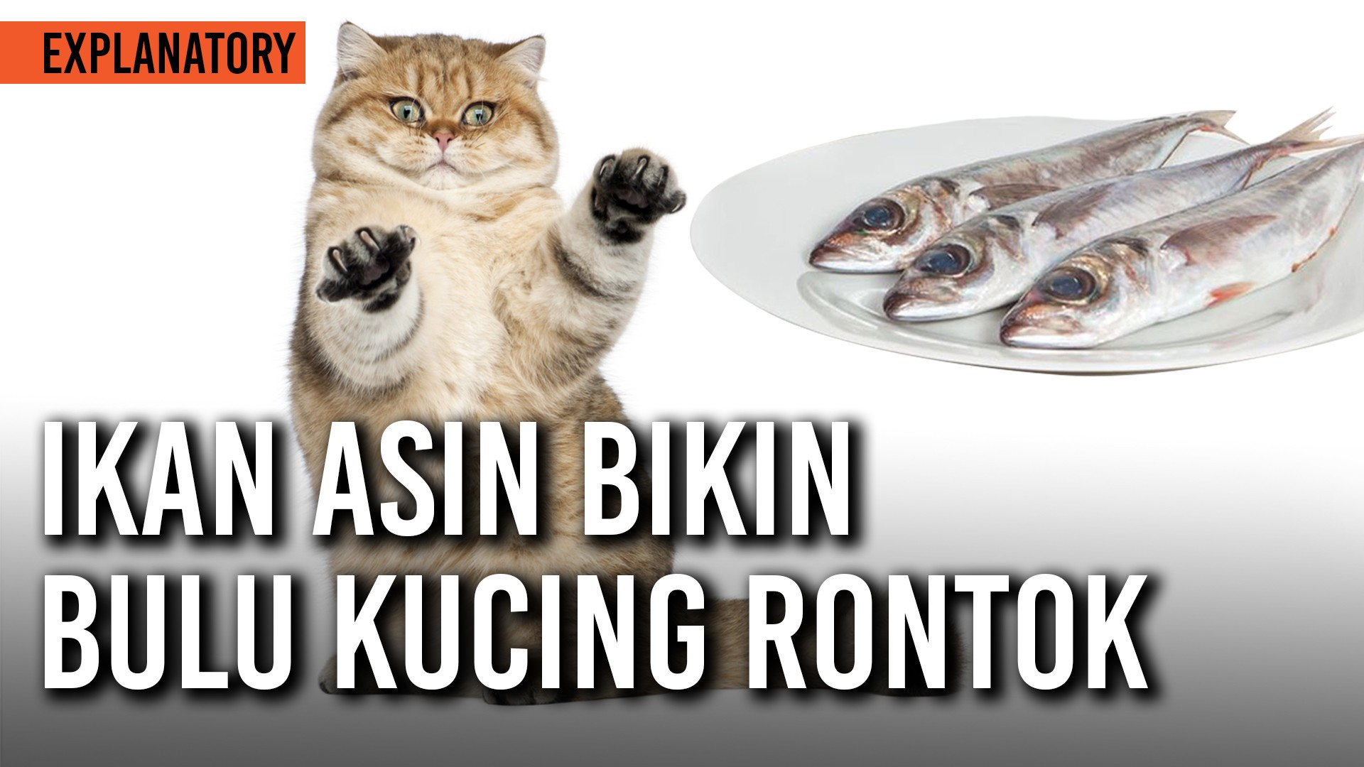 Benarkah Ikan Asin Bikin Bulu Kucing Rontok