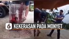 Viral Aksi Pria Lakukan Kekerasan Terhadap Monyet Hingga Di Cat Merah