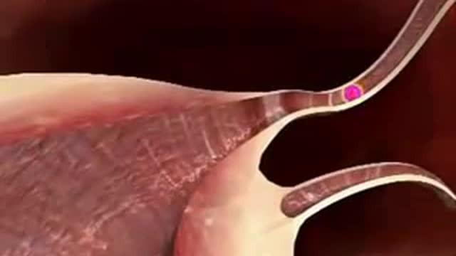 Streaming Mengenal Sistem Reproduksi Pada Wanita Secara Detail Vidio Com