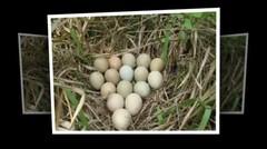 Awalnya dikira Telur Ayam , tapi Saat menetas malah keluar Makhluk indah ini , Kok bisa