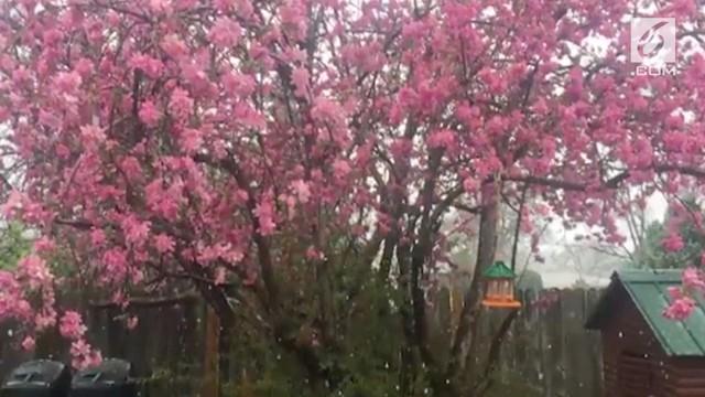85 Gambar Lucu Bunga Sakura HD