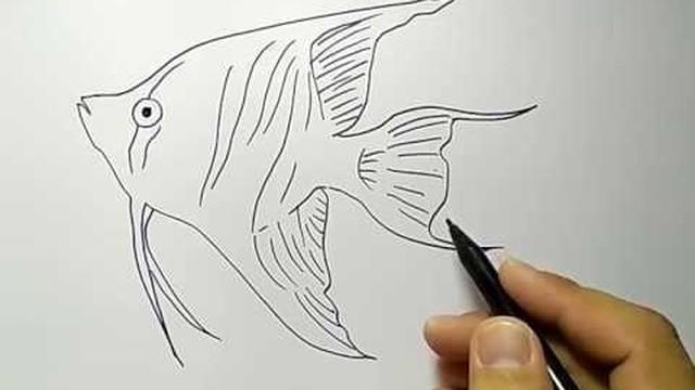 Download 4500 Gambar Ikan Hias Dengan Pensil HD Terbaru