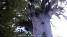 10 Hutan Paling Misterius di Dunia