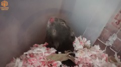 Tingkah Manja Hamster