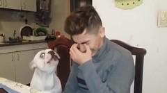 Reaksi Anjing Ketika Pemiliknya Menangis