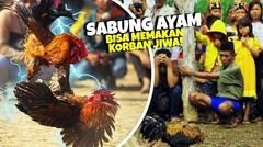 Seorang Penonton Sabung Ayam T3w4s M3ngenask4n di Tangan Ayam Jago yang Mengamuk!