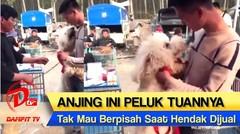 SEDIH! Anjing ini Peluk Tuannya Saat Hendak Dijual ke Pedagang, Videonya Viral