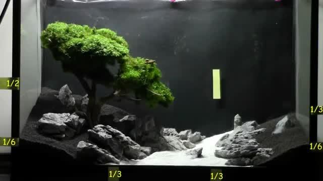 Cara Membuat Bonsai Aquarium Keren