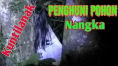 Penampakan kuntilanak penunggu pohon nangka