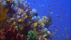 Amazing Raja Ampat Diving beautiful
