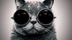 Tingkah polah kucing lucu dari seluruh penjuru dunia