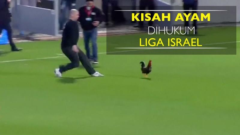 64 Gambar Ayam Israel Terbaik